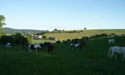 Stinah Pferde