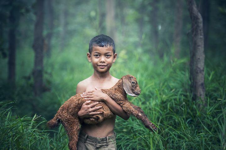 Rapport être humain - animal