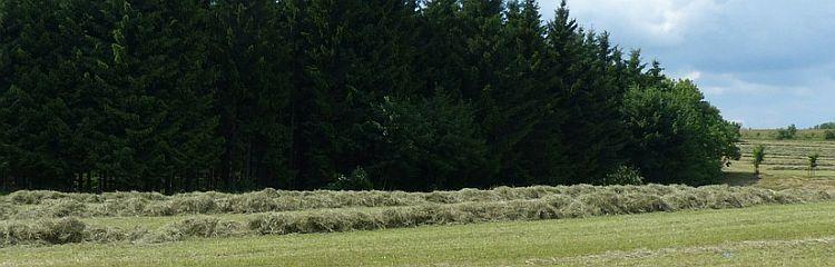 geschnittenes Gras