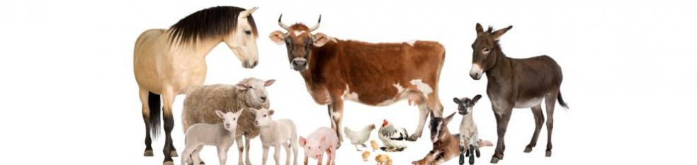 Tiergruppe