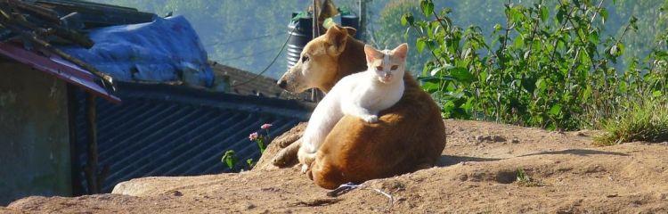 Katze liegt auf Hund
