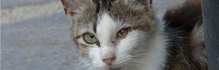 Katze mit Krankheit