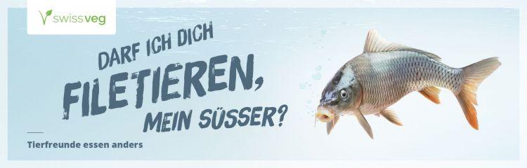 fische, plastikmüll, fischerei, fisch vom tisch